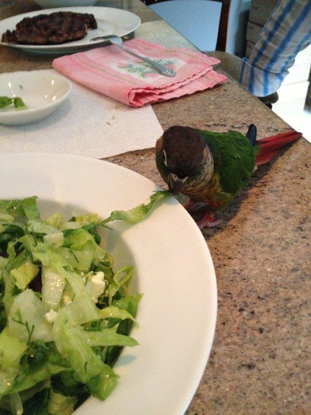 Dimitri Salad