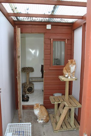 cats cottage chalet
