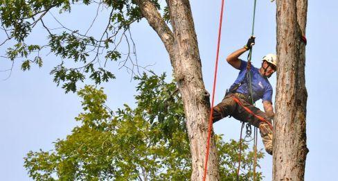 Tree work in Cornelia, GA