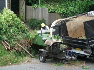 Road cleaning - cutting tree branches