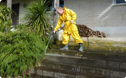 Expert cleaning a path in New Zealand